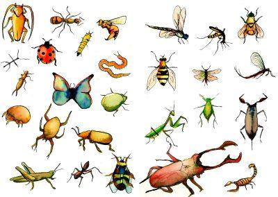 Insectos trazo directo